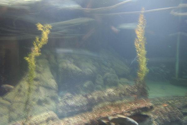 monterey-bay-aquarium082