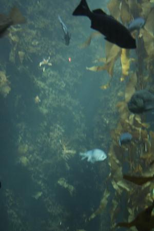 monterey-bay-aquarium121