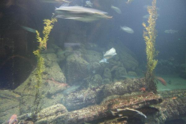 monterey-bay-aquarium077