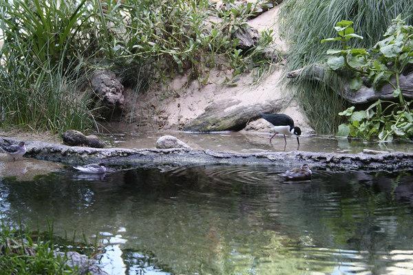 monterey-bay-aquarium033