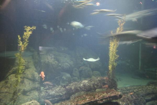 monterey-bay-aquarium074