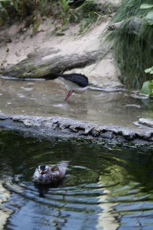 monterey-bay-aquarium046