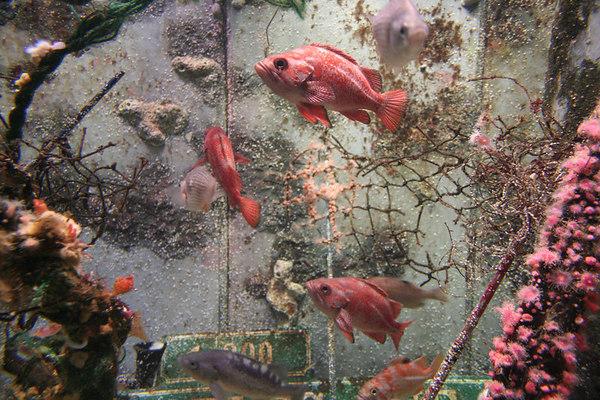 monterey-bay-aquarium068
