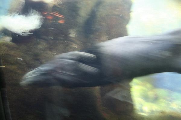 monterey-bay-aquarium013