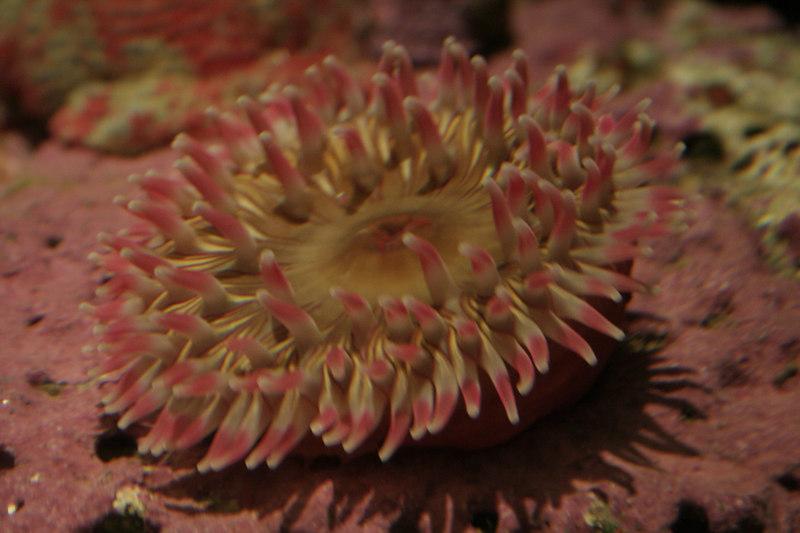20061111_aquarium_210