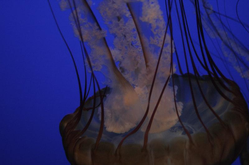 20061111_aquarium_026