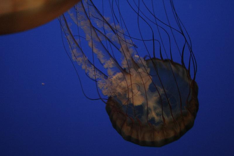 20061111_aquarium_025