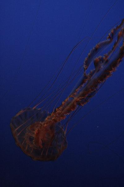 20061111_aquarium_008