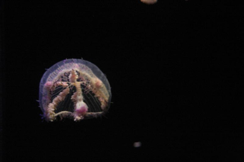 20061111_aquarium_171