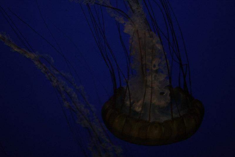 20061111_aquarium_023
