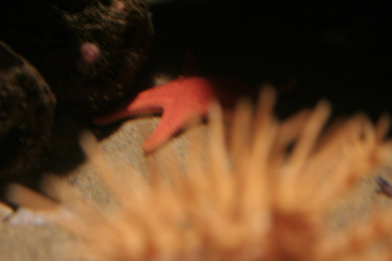 20061111_aquarium_212