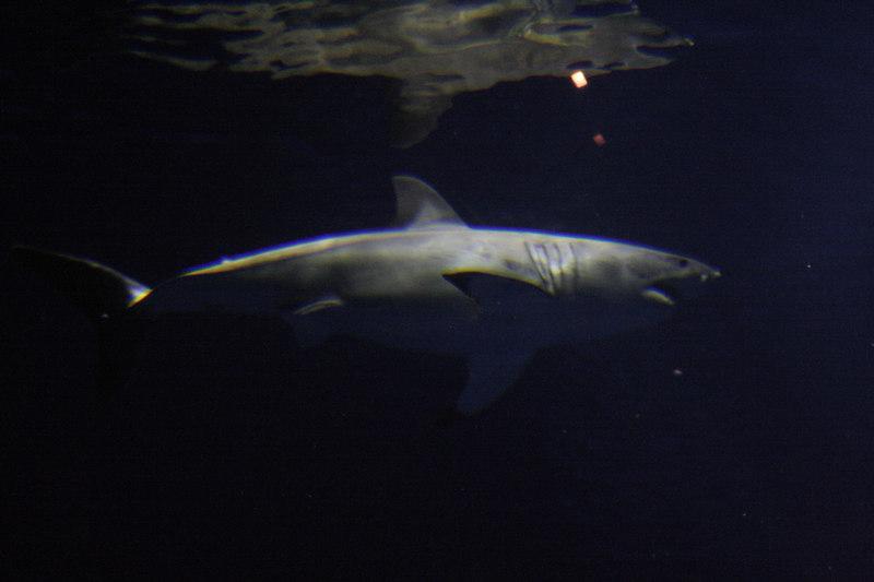 20061111_aquarium_040