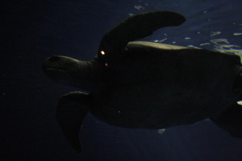 20061111_aquarium_041