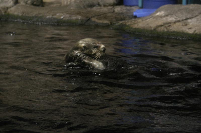 20061111_aquarium_176