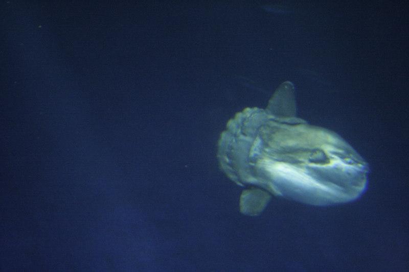 20061111_aquarium_052
