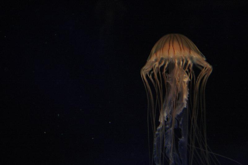 20061111_aquarium_056
