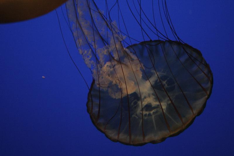 20061111_aquarium_024