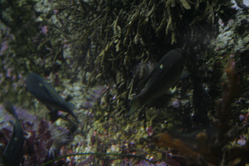 20061111_aquarium_184