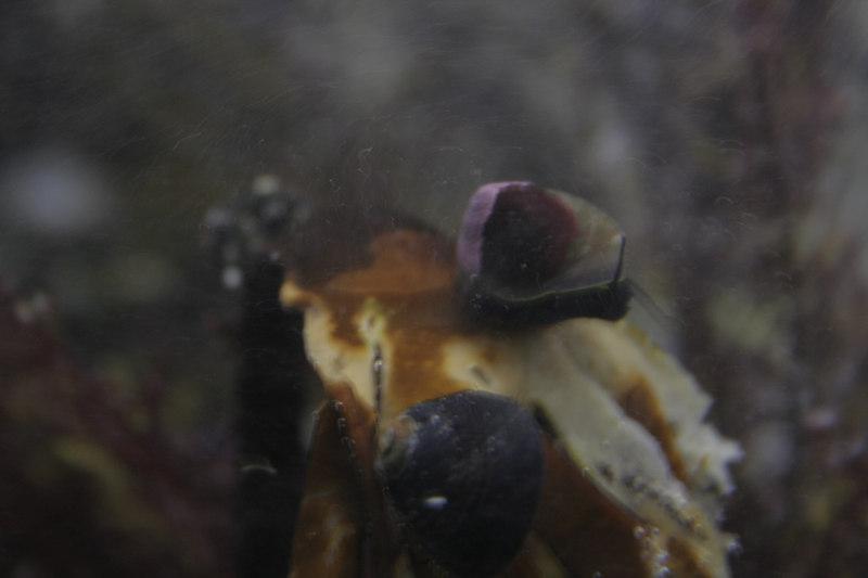 20061111_aquarium_195