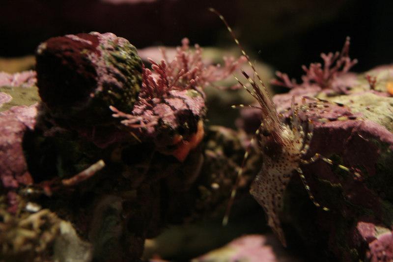 20061111_aquarium_207