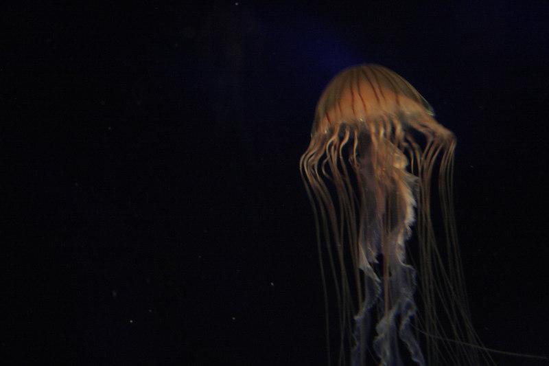 20061111_aquarium_058