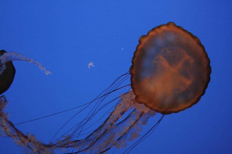 20061111_aquarium_029