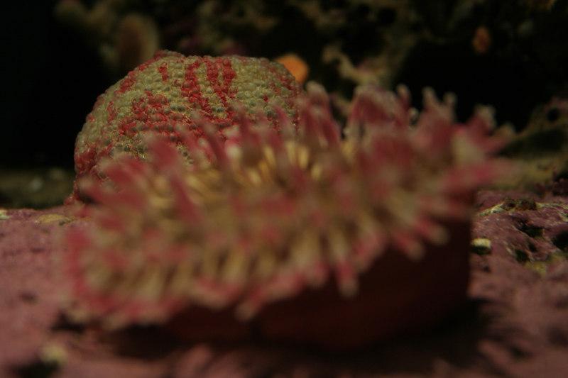 20061111_aquarium_205