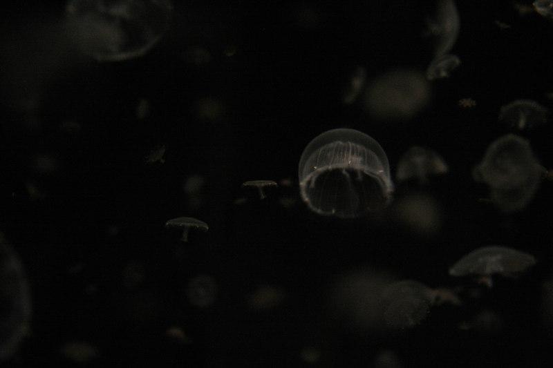 20061111_aquarium_034