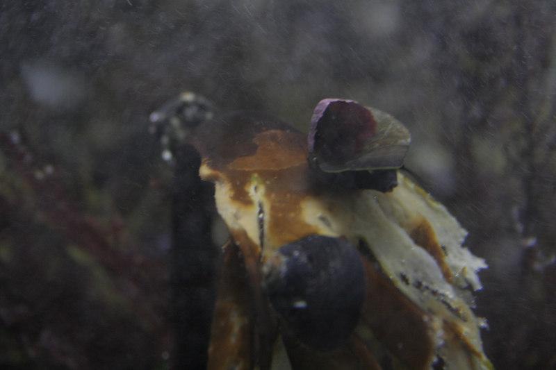 20061111_aquarium_199