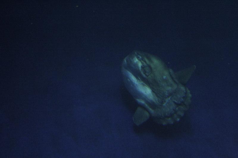 20061111_aquarium_045