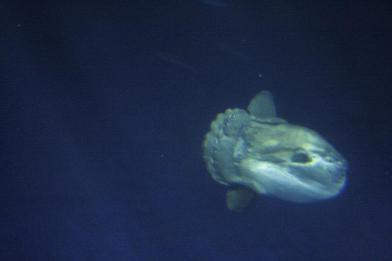 20061111_aquarium_053