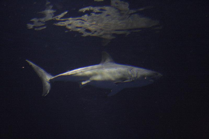20061111_aquarium_042