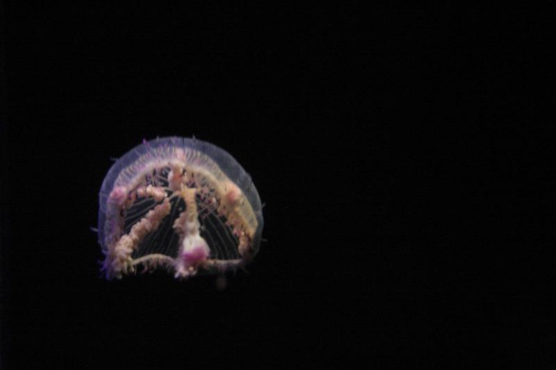 20061111_aquarium_172