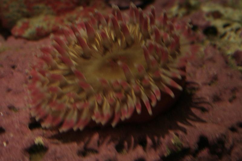 20061111_aquarium_209