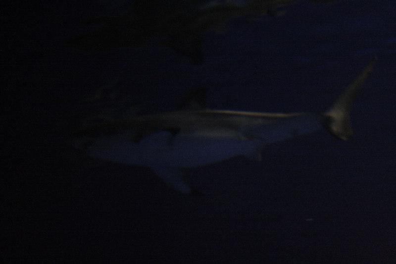 20061111_aquarium_051