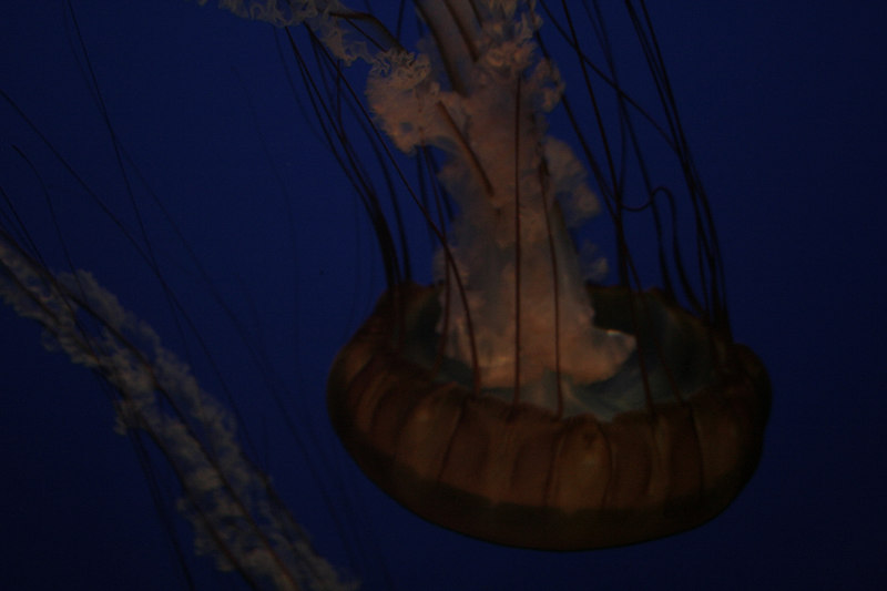 20061111_aquarium_022