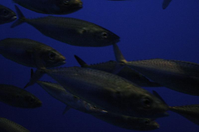 20061111_aquarium_005