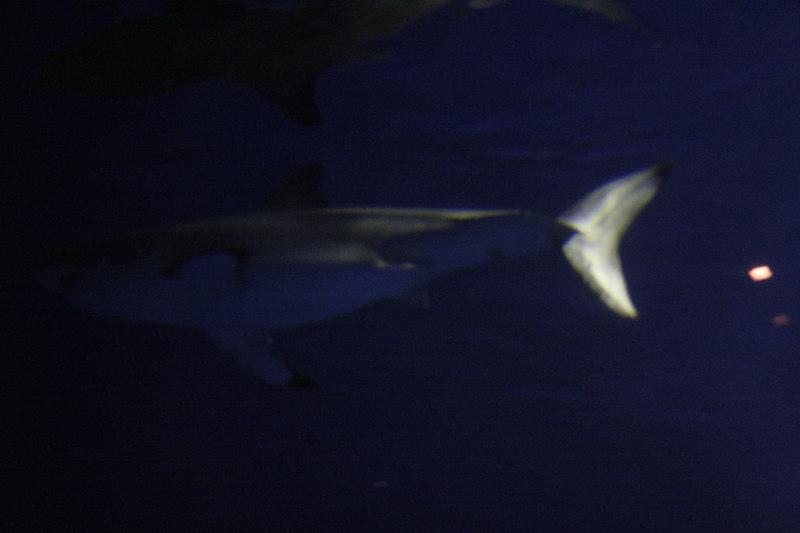 20061111_aquarium_050