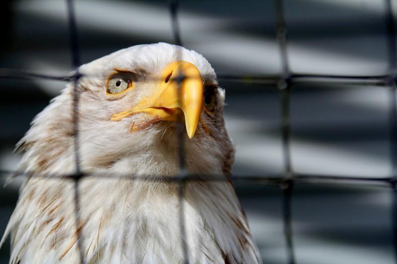 Bird Sanctuary-Sitka-jea