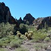 Living Desert