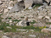 A [edited for content] marmot that nearly got into our packs and ate our food at Upper Jean Lake.