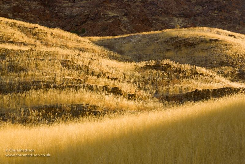 Grasses, Twyfelfontein