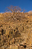 Rock formations and Commiphora tree, Twyfelfontein, Namibia