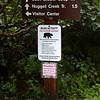 No bear!