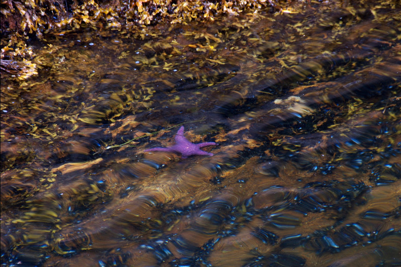 Purple starfish under water. Boy, he was a bright purple!