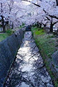 We landed right at the peak of the cherry bloom, so the first morning we woke up early to enjoy the spectacle of the Path of Philosophy
