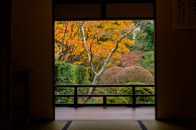 """Myoshin-ji. We learned that Japanese temples & gardens are designed to best frame the view from a seated position, """"one tatami mat back"""" - about 1.8 meters."""