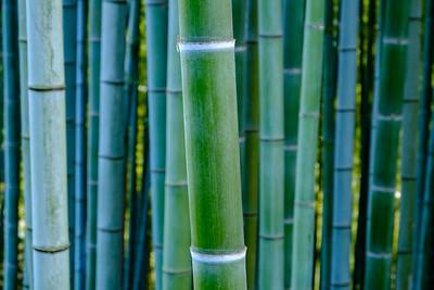 Take no Michi (bamboo road)