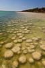 Thrombolites, Lake Clifton, Yalgorup National Park, Western Australia