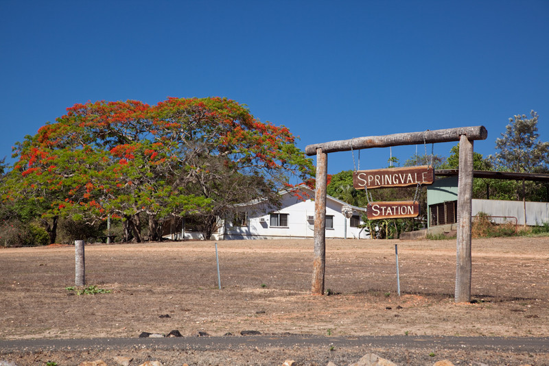 Springvale cattle station, and flowering Poinciana tree, near Cooktown, Queensland, Australia